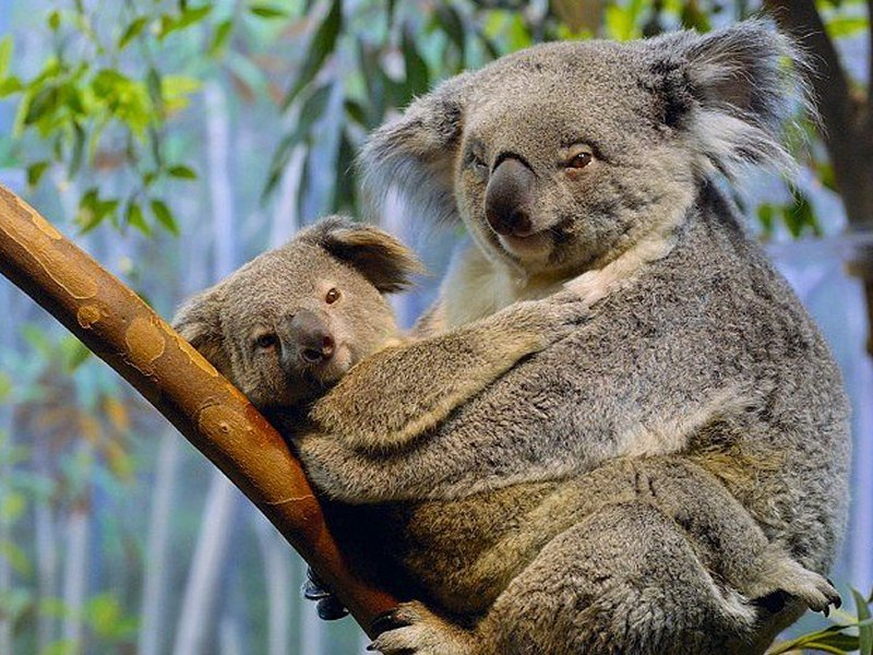 1. �������������� Exclusive Vacation Australia 6D5N (��ԡ�����)